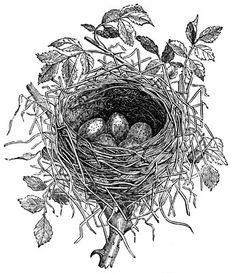 Bird Nests :: Nest of Butcher Bird printables Bird Nest Fern, Bird Nests, Herbst Tattoo, Smal Tattoo, Stencils, Images Vintage, French Vintage, Different Birds, Desenho Tattoo