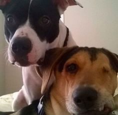 """Unwanted Rescue Dog Now Helps """"Foster"""" Scared And Special-Needs Shelter Pups"""