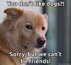 I don't know about people who don't like dogs.  *wink* ???
