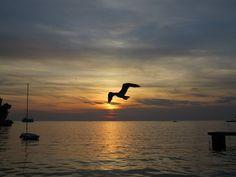Free photo: Sea, Croatia, Holidays, The Seagull - Free Image on Pixabay - 644840