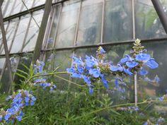 Royal Botanical Gardens Edinburgh Sept 2014