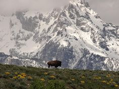 Title: Buffalo Mountain Artist: Dan Sproul Medium: Photograph - Photograph-high Resolution