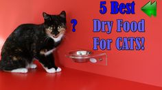 Best Dry Food For Cats | Top 5 Best Dry Cat Food 2017