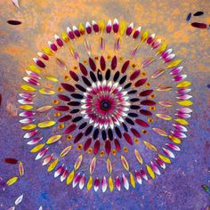Mesmerizing Mandalas Made From Flowers and Vegetables
