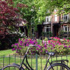 Les jardins d'Amsterdam. Quartier Pijp.