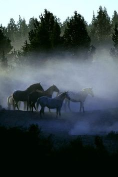 Wild Horses in The Morning Mist