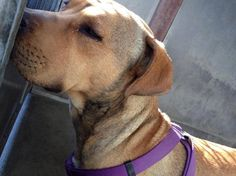 Tears run down dog's face as shelter pup cries out from a broken heart