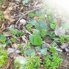 Schau rein und hör rein.. Plants, Glee, Nice Asses, Ideas, Plant, Planets