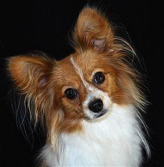 Princess Penelope...My little rescue dog!