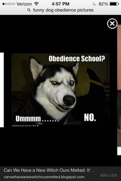 I was bring my dog to obedience school