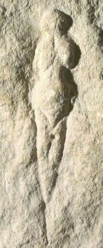Venus of Abri Pataud. Photo: 'Discovering Perigord Prehistory' by B & G Delluc, A Roussot & J Roussot-Larroque. Ancient Goddesses, Gods And Goddesses, Ancient Art, Ancient History, Venus, Art Pariétal, Paleolithic Art, Lascaux, Prehistoric Man