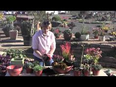 Garden photojournalist and author Debra Lee Baldwin shows how to combine red, orange and green succulents in a wide, shallow pot. It all comes together quickly (in under five minutes). Debra provides a list of plants, explains why she chose them and their qualities and uses. Filmed in midwinter when many succulents exhibit reddened leaves. Locat...
