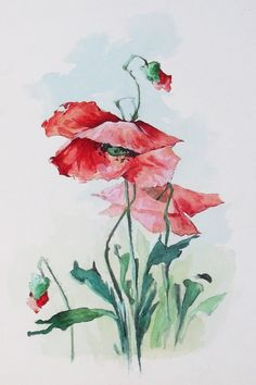 Pipacs virágok - akvarell kép jelzés nélkül - Szilárd Katicza rajzkönyv mappa akvarell munkái közül