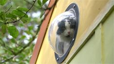Karins DIY Tiny House in Portland Dome window for the cat! Tiny House Movement // Tiny Living // Tiny House on Wheels // Tiny House Pets // Tiny Home Cat // Tiny Home Building A Tiny House, Tiny House Plans, Little Houses On Wheels, Tiny House Nation, Bus House, Dome House, Tiny House Living, Small Living, Living Spaces