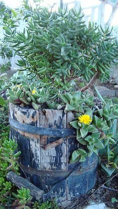 reutilización   de cosas encontradas, en la jardinería.-palmeras-y-basura-