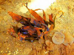 'Art of Underwaterworld     07' von Dirk h. Wendt bei artflakes.com als Poster oder Kunstdruck $16.99