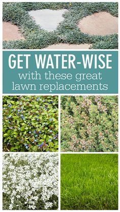 Five drought-tolerant lawn replacements: Mix it up, and get efficient. Grow these water-wise plants in place of traditional turf grass. Landscape Design, Garden Design, No Grass Backyard, No Grass Yard, Drought Tolerant Landscape, Ground Cover Drought Tolerant, Drought Resistant Landscaping, Low Maintenance Landscaping, Low Maintenance Garden