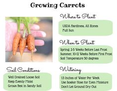 Want to grow carrots