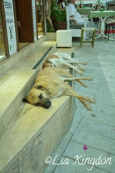Dogs sleeping kalkan turkey Kalkan Turkey, Sleeping Dogs, Projects To Try, Holidays, Amazing, Places, Beautiful, Holidays Events, Holiday