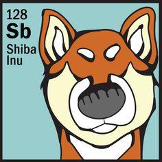 Element Shiba