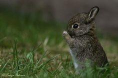 Bunny - photo by Tanja Askani, via weheartit