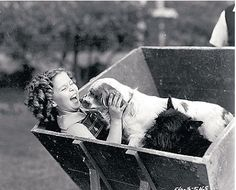A while back, a kind reader sent the Scottish Terrier and Dog News this photo of Shirley Temple with a Scottie and what appears to be a spaniel. Classic Hollywood, Old Hollywood, Hollywood Cinema, Hollywood Glamour, Hollywood Actresses, Shirly Temple, Child Actresses, She Movie, Bright Eyes