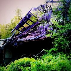 Kenichi.Kamio - Wisteria and deserted house from Today's piano piece  May.17,2014