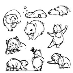 Post with 28 votes and 1805 views. How to draw a wombat Cute Animal Drawings, Animal Sketches, Cartoon Drawings, Art Drawings, Cute Animal Videos, Cute Animal Pictures, Funny Pictures, Cute Wombat, Australian Animals