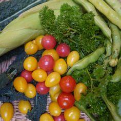 organic homegrown vegetable