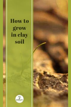 Clay soils hold huge amounts of nutrients, but they really have their issues for plant growth. You can still grow in clay soils by amending them. Otherwise, you will face challenges. Although this won't stop you growing plants. // garden houses // garden backyards // garden diys // backyard gardening // backyard // home and garden // #outdoor decorating ideas #outdoor landscaping #outdoor gardens Growing Vegetables, Growing Plants, Outdoor Landscaping, Outdoor Gardens, Amending Clay Soil, Vegetable Garden Soil, How To Make Compost, Garden Houses, Soil Improvement