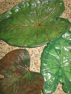 How to make a concrete leaf casting and paint it