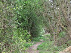 joachimartist: Vroenhoven Spring trail