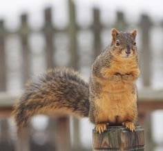 Squirrel animal photography wildlife photography