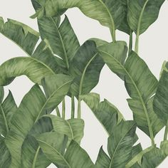 Botanical Decor, Botanical Wall Art, Botanical Drawings, Plant Painting, Plant Art, Vintage Style Wallpaper, Cactus Pictures, Cactus Art, Plant Illustration