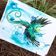 Hey guys! I'm back from Costa Rica and back to work! I have so many fun projects in mind from the awesome wildlife. Here is a little drawing of the quetzal