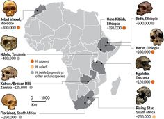 World's oldest Homo sapiens fossils found in Morocco |  Researchers have redated a skull from a cave called Jebel Irhoud to a startling 300,000 years ago, and unearthed new fossils and stone tools. The result is the oldest well-dated evidence of Homo sapiens, pushing back the appearance of our kind by 100,000 years.