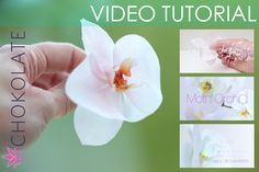 Wafer Paper Moth Orchid - Phaleanopsis VIDEO TUTORIAL available in my store www.chokolate.be Wafer Paper Flowers, Wafer Paper Cake, Gum Paste Flowers, Fondant Flowers, Sugar Flowers, Diy Flowers, Paper Flower Patterns, Paper Flower Tutorial, Cake Templates