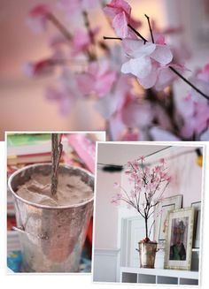 Aunt Peaches: Friday Flowers: Ann's Cherry Blossoms