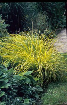 carex 'bronze reflection' maybe at top of yard along the street, Hause und garten