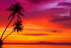 palm trees tropical beach beautiful red sky ocean nature landscape scenery sunset clouds trees the tropical beach a beautiful red sky sunset landscape HD wallpaper Maura, Palm Tree Silhouette, Destinations, Sunset Wallpaper, Scenery Wallpaper, Hd Wallpaper, Sunset Landscape, Tropical Beaches, Sunset Beach