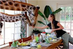 """This is a hotel called """"Giraffe Manor"""" in Kenya!) If I ever go to Africa I will go here. Life In Paradise, Paradise On Earth, Jehovah Paradise, Call Of The Wild, Everlasting Life, Jehovah's Witnesses, Best Hotels, Amazing Hotels, Unusual Hotels"""