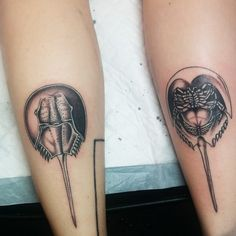 Horseshoe crabs by Kate DeCosmo at Euphoria Tattoos in Tallahassee