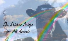 The rainbow bridge for ALL animals