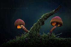 champignons-rose