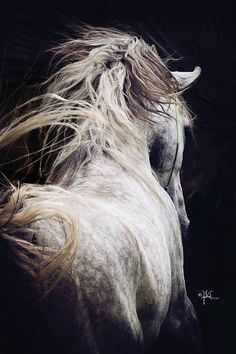 The púca is primarily a creature of Irish folklore. It takes the form of a sleek black horse with a flowing mane and luminescent golden eyes