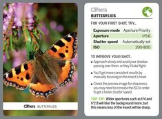 44 tips cards for photographers to cut out and keep or browse on your phone! Photography Cheat Sheets, Landscape Photography Tips, Aerial Photography, Night Photography, Landscape Photos, Nature Photography, Scenic Photography, Digital Camera Magazine, Digital Camera Tips