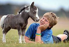 Pocket size horse.