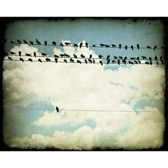 Be Different. Be That Bird. Many and One by TriciaMcKellarPhoto