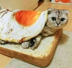 This realistic looking fried egg blanket can be used to cover a cold kitty or used as a rug/mat. Looks especially cute when paired with the Slice of White Bread Soft Plush Cat Cushion. Cute Cats, Funny Cats, Funny Animals, Cute Animals, Adorable Kittens, Cat Whisperer, Pet Mat, Tier Fotos, Cat Gif