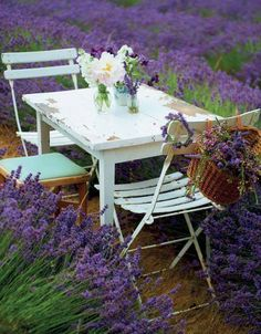 al fresco among the lavender